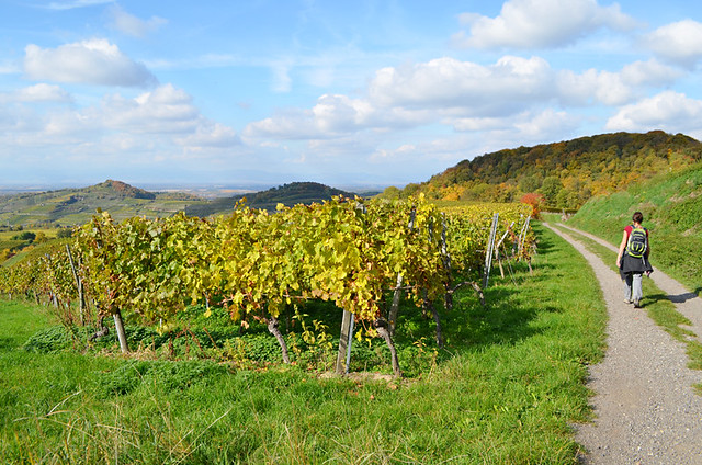 Walking in the vineyards, Ihringen, Kaiserstuhl, Germany