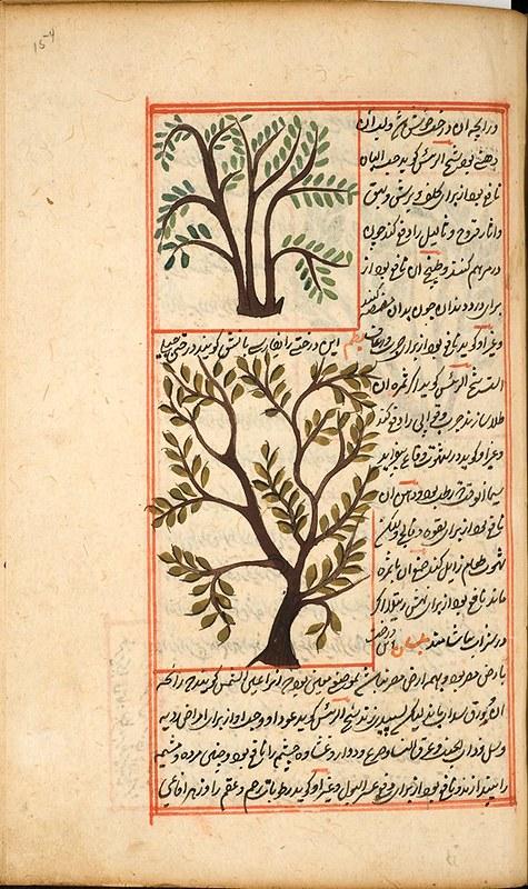 ban ağacı, baki, gazel, şair baki, Târık İleri, tarık ileri ıspata Çeksün livâ-yı saltanat-ı hüsni kadd-i yâr