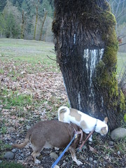Sniffing the slime mold