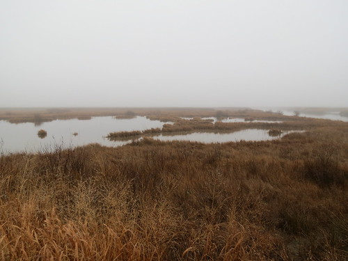 Photo of marshes at Fairmount Wildlife Management Area