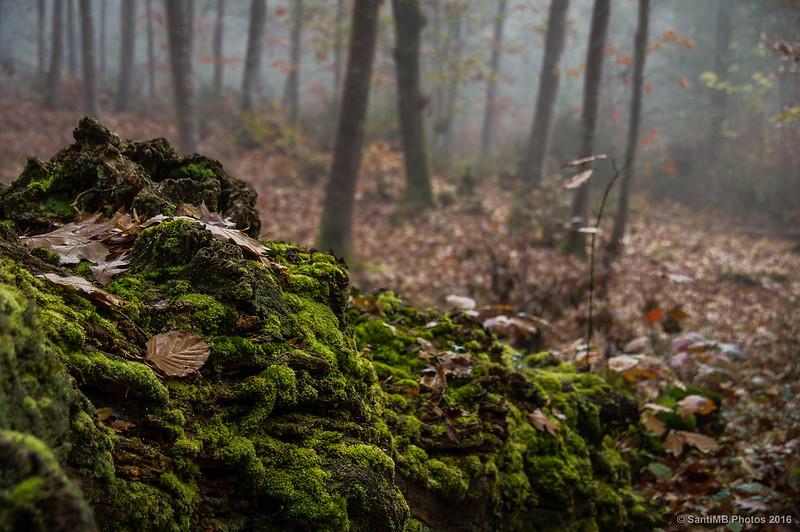 Un micromundo en el tronco podrido