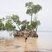 boy-in-water-in-punta-gorda-florida-mangrove 06-750