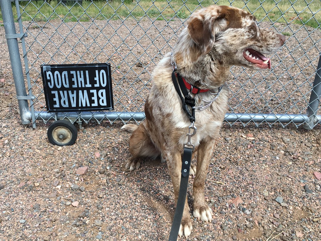 Beware Of Dog Sign Board Online