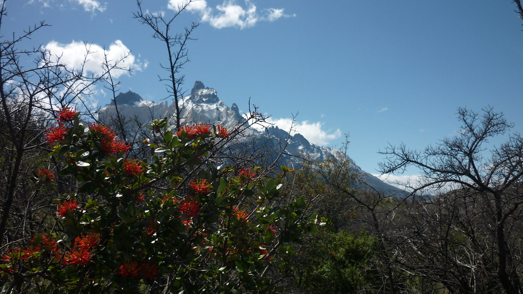 Colors of Patagonia Summer with Los Cuernos in the background!