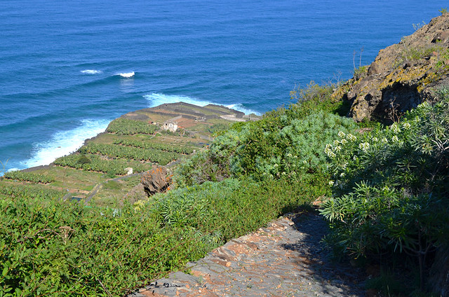 Path near San Juan de la Rambla, north coast, Tenerife