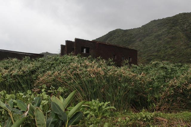 石梯坪水梯田裡的輪繖草。攝影:廖靜蕙