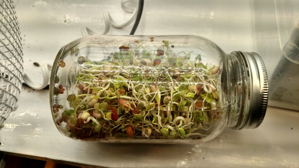 Microgreens Gardening - Page 9 24433644446_7a217d081a_b