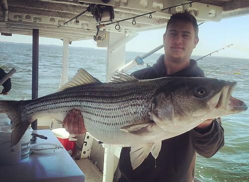 Striped bass photo courtesy of Grant Barnes