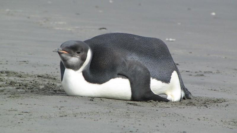 Linux медленный