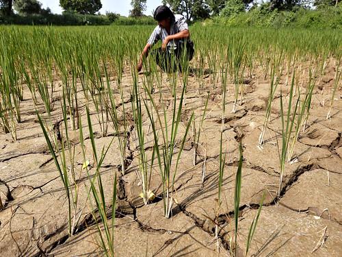 कृषि पर जलवायु परिवर्तन का खतरा