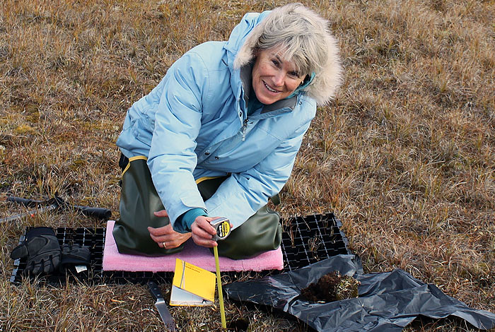 Los Alamos National Laboratory scientist Cathy Wilson measuring how soil properties change with depth at the DOE Next Generation Ecosystem Experiment, NGEE-Arctic, field site near Barrow, Alaska.