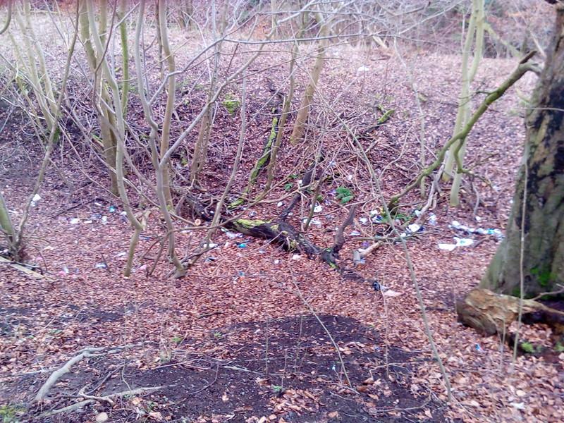 Community Litter Pick 5th March Beeslack Woods 25441359471_83132df870_c