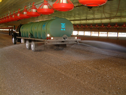 Liquid alum being applied in a chicken house