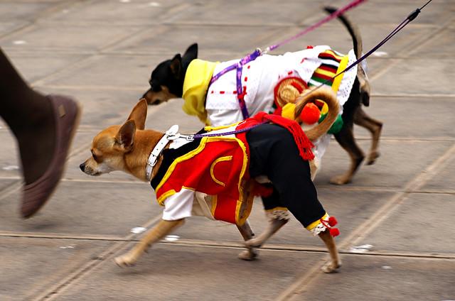 Traditional dogs, San Abad, Buenavista del Norte, Tenerife