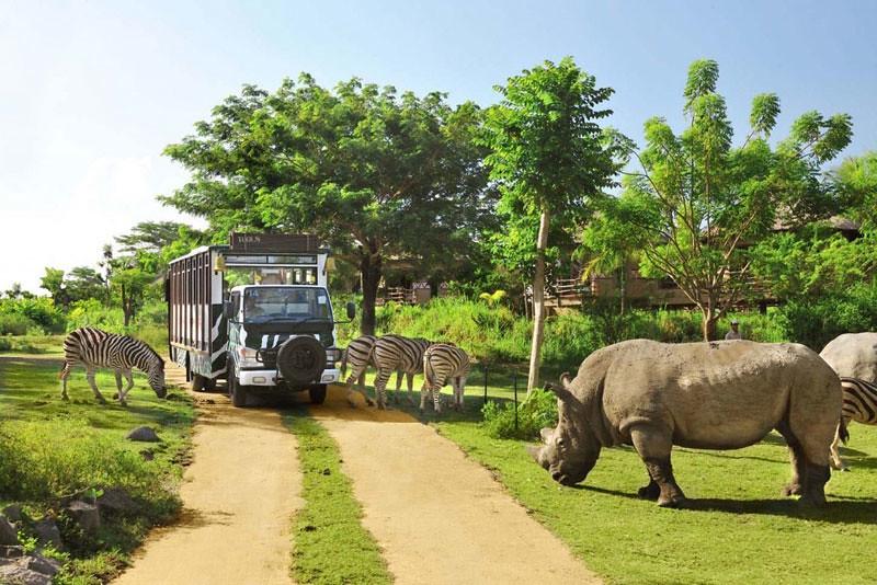 8-bali-safari