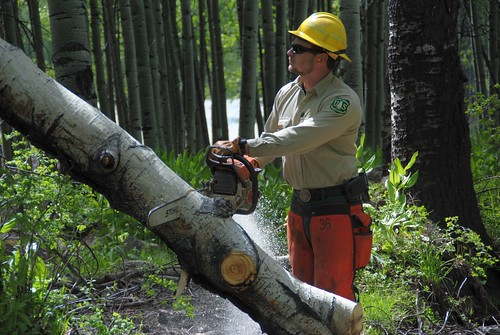 US Forest Service OHV crew member cutting hazard tree on an ATV trail