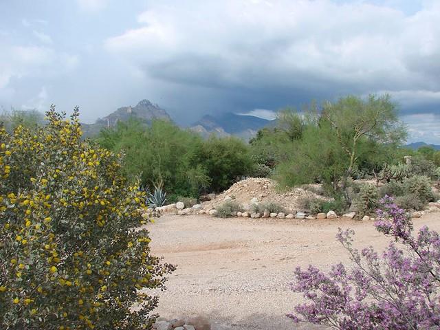 Tucson Rudasill front yard