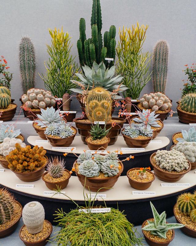 cactus display at rhs cardiff