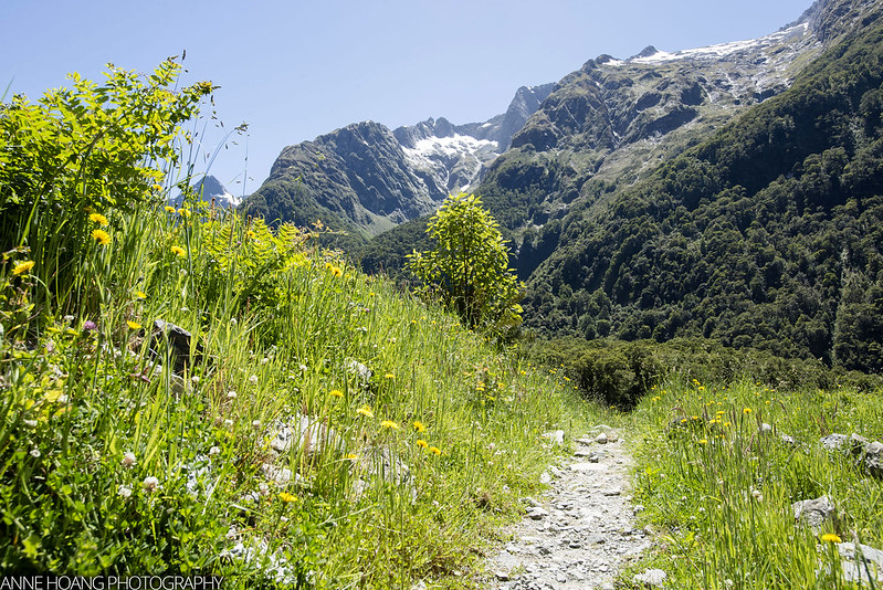 Milford Track - meadow
