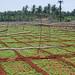 Farms near Coimbatore