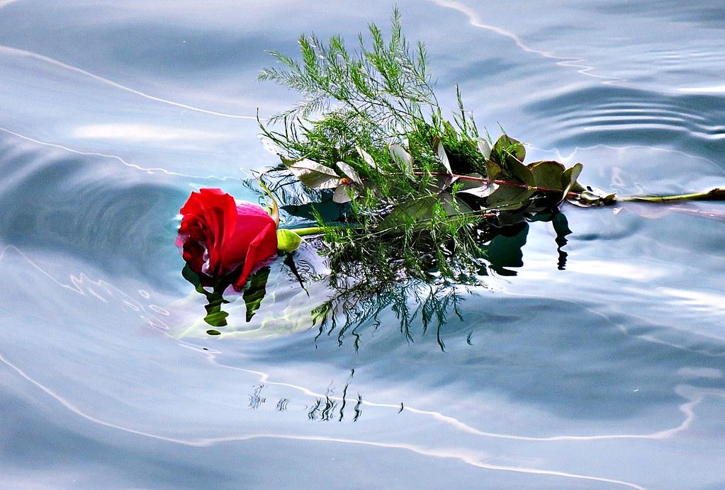Juan manuel de rosas resumen yahoo dating 7