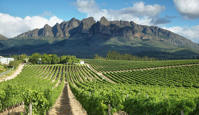 vineyard-south-africa-private-equity-investing