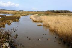River Yar, Brading Marshes