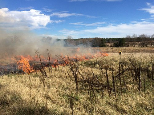 A prescribed burn on the Sylamore Ranger District