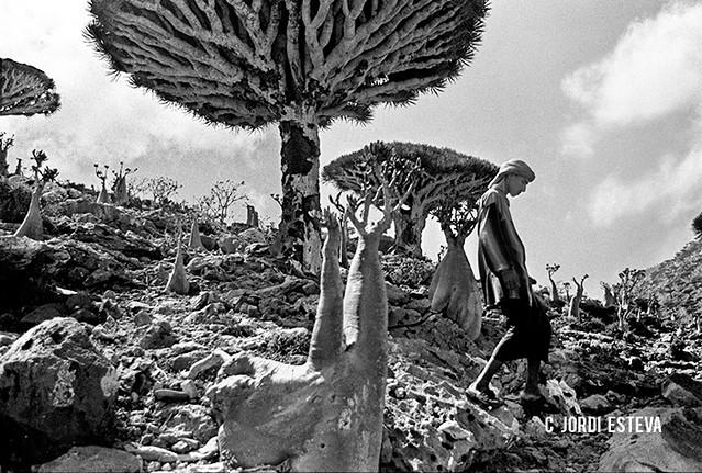 Imagen de Socotra en blanco y negro (Fotografía de Jordi Esteva)