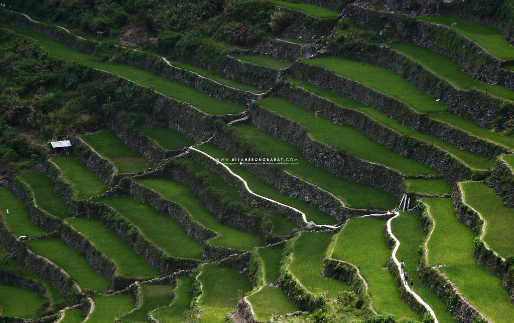 Hiking in Batad Rice Terraces Ifugao Mount Amuyao Traverse
