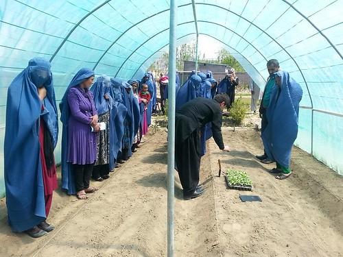 Women farmers in Afghanistan learning backyard vegetable growing techniques
