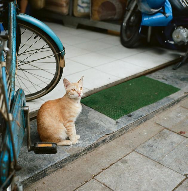 Hanoi- animals 1