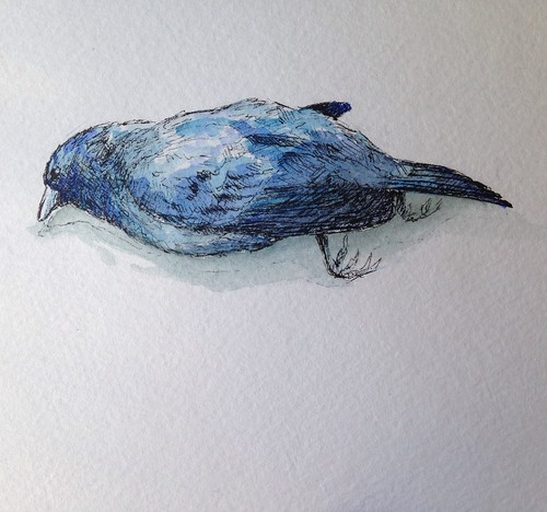 Dead indigo bunting. I found him while cycling outside Willard, Missouri last summer. He hadn't been there long. He was too pretty not to honor him with a painting.