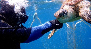 萬里桐的薛教練與助手潛水員無畏海況不佳,仍下海拆除廢棄漁網,後將網具交由墾管處處理。薛教練提供