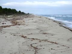 La plage à hauteur du Pozzu Sale : vers le Nord