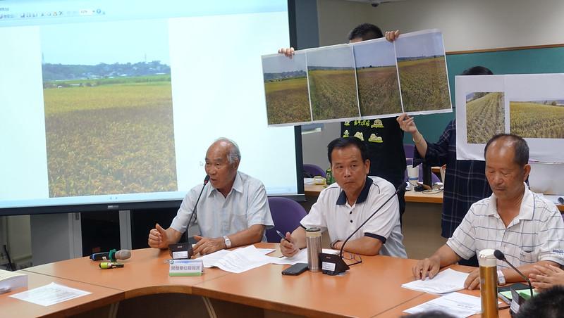 老農出示近日因為天氣燥熱缺水而乾枯傾倒的水稻田照片,憂中科三期排擠農業用水。賴品瑀攝。