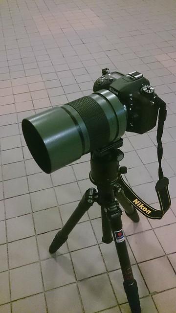 Sigma 600mm f8 反射木紅棉