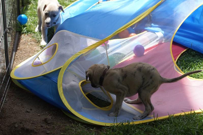 Hiiiielfe, wir sind doch noch nicht zum Rettungshund ausgebildet! Unsere Geschwister sind verschüttet! Was jetzt???