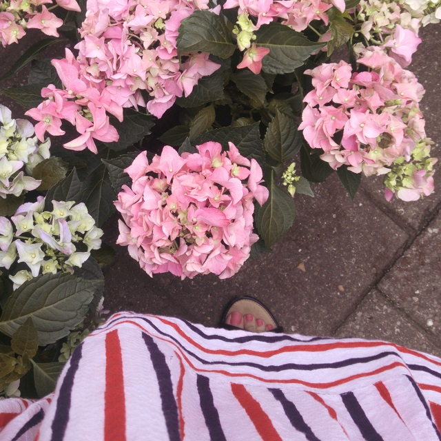 hydrangeas and striped dress