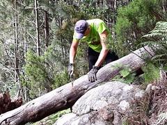 Départ du raccordement Finicione RD : Andy s'essaie à scier un tronc