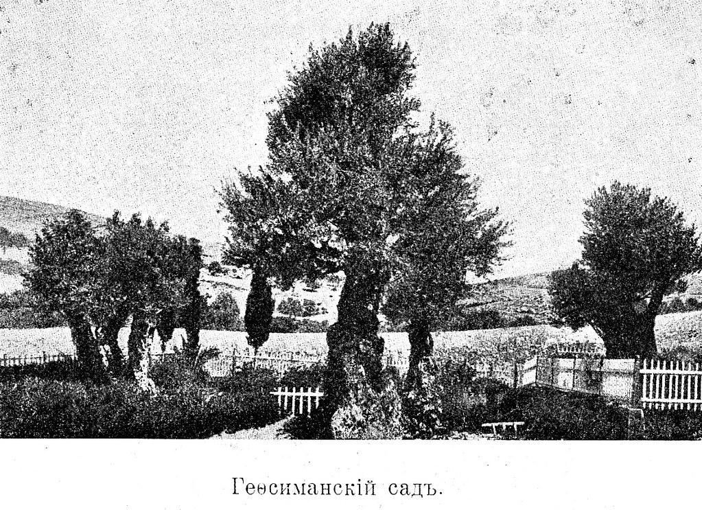 Изображение 97: Гефсиманский сад.