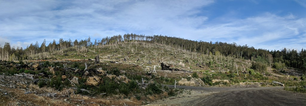 斯蒂克斯谷附近的皆伐地