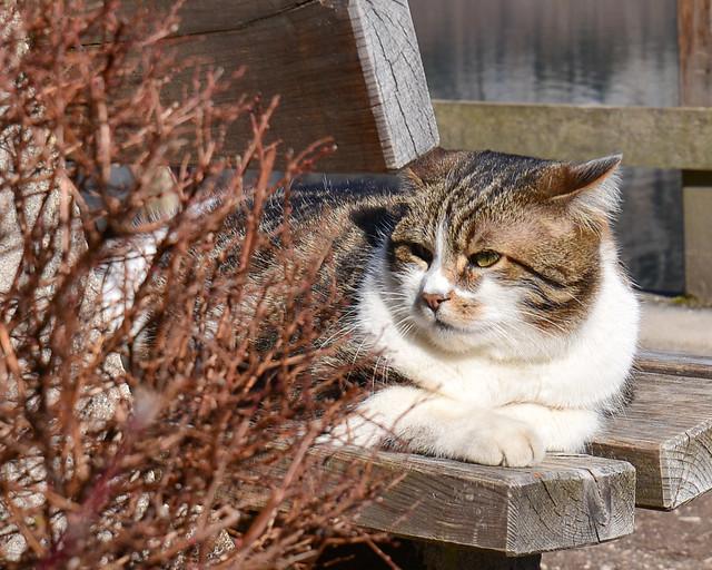 Pequeño gato sentado al sol en Hallstatt