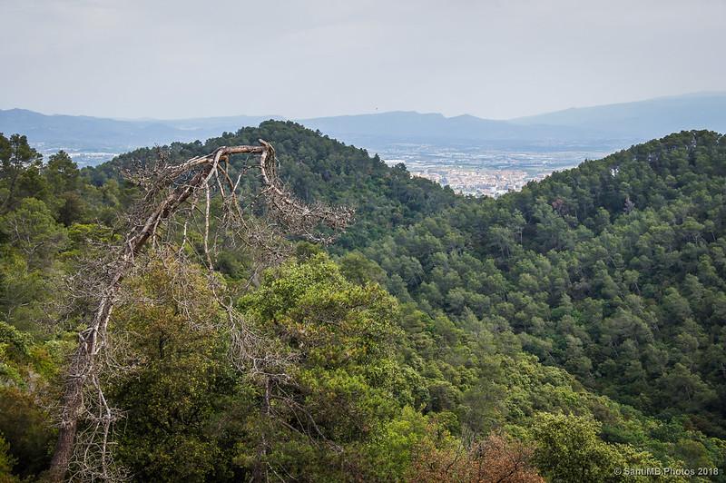 Mirando hacia el norte desde Can Valldaura