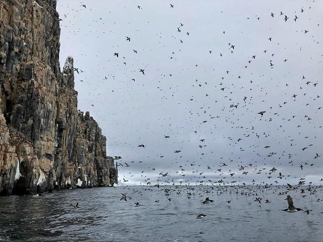 Acantilado Alkefjellet en Svalbard