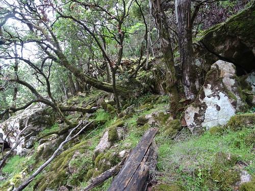 Après la traversée du Valdu Grande : une carbunara le long du chemin