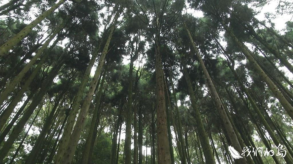 958-3-7經營管理,包含除草、除蔓、修枝和疏伐等撫育手段。疏伐是中後期重點工作,調整森林密度,適度取出疏伐木提供市場需求。
