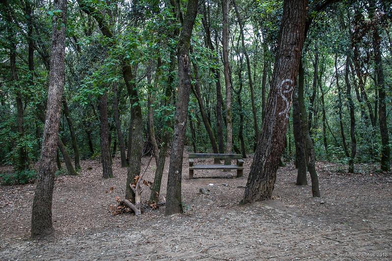 Rincón del bosque de Collserola entre Can Coll y Can Cerdà