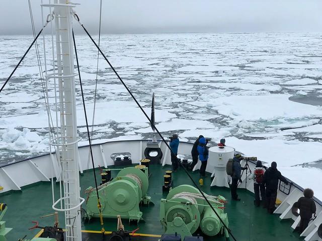 El MS Ortelius avanzando por el mar de hielo de Svalbard