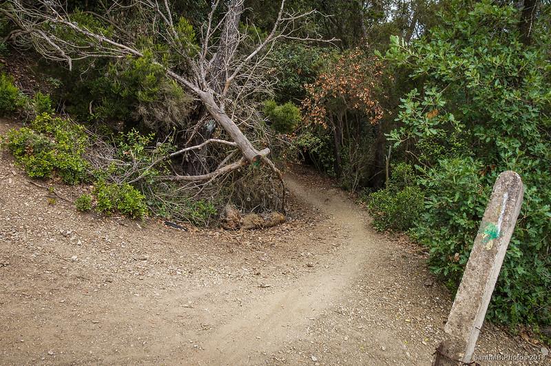 Cruce de senderos en la Serra d'en Masriera